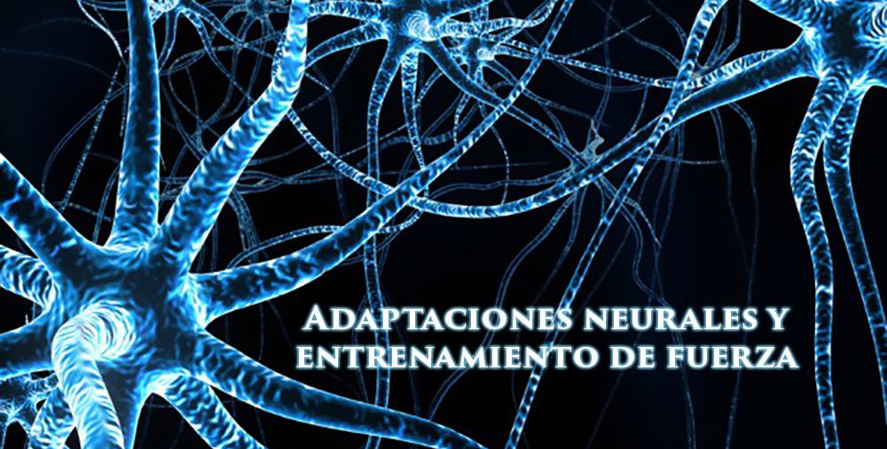 adaptaciones neurales y fuerza