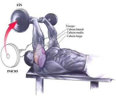 Musculos PF