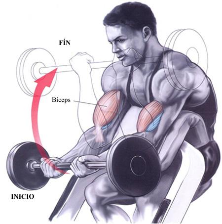 Muscular y Tonificar: Curl de biceps en banco Scott