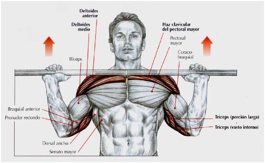 Muscular y Tonificar: Press Militar o Press Frontal con barra