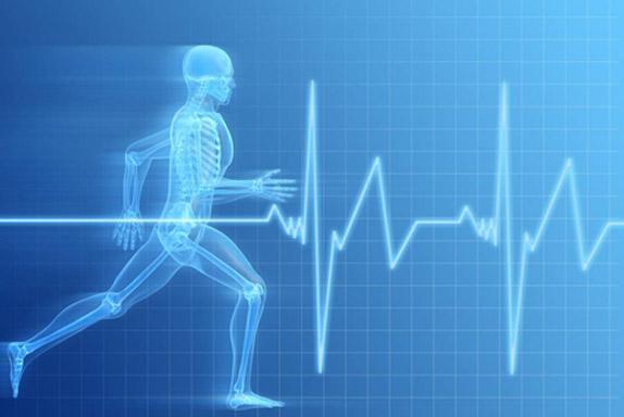 El corazon y su adaptacion al ejercicio fisico