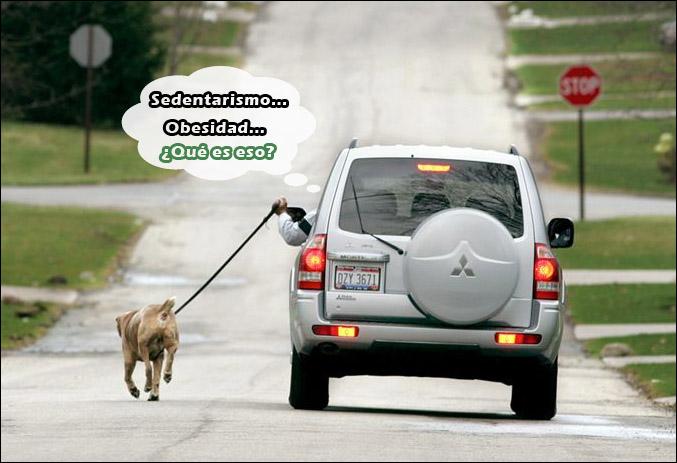 sedentario paseando perro