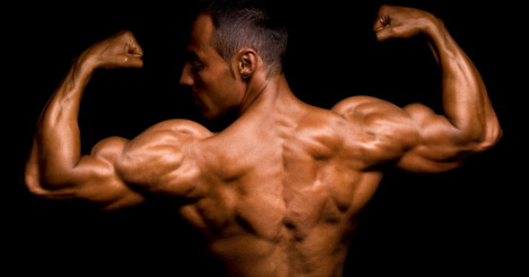 body_building_athlete_biceps_fit_muscle_muscular-w590