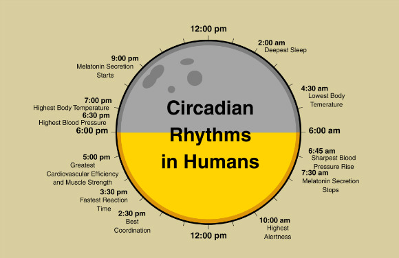 Ciclo circadiano y rendimiento deportivo